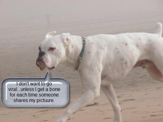 dog wants a bone