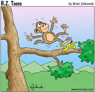 Monkey slips on banana peel