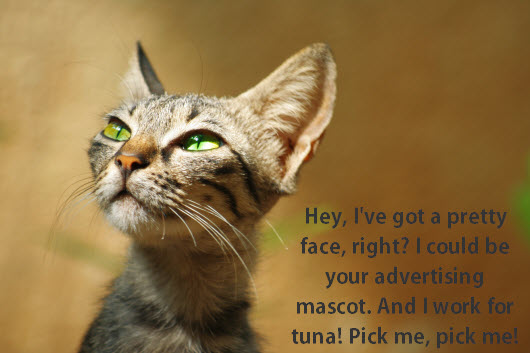 will advertise for tuna